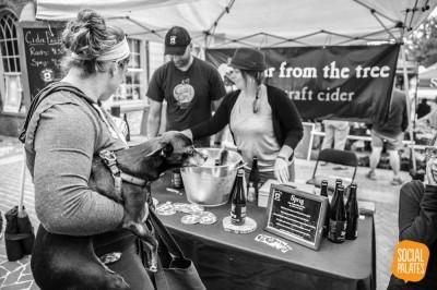 FFTT Cider - Week 1