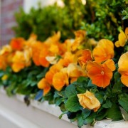 Contest Looking to Grow New Crop of Window Boxes
