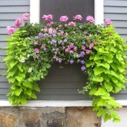 Creative Window Boxes To Be Honored For Helping Beautify Salem
