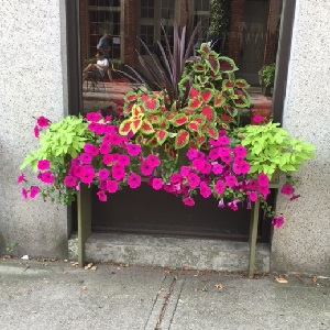 Window Box single