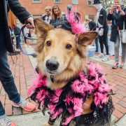 Howl-o-ween Pet Parade & Costume Contest Returns to Salem This Sunday