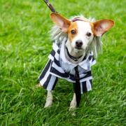 Howl-o-ween Pet Parade Returns WITH Virtual Contest in 2021